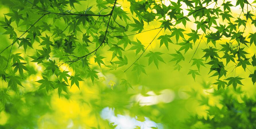 2560x1600_GreenLeafs_66